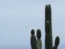 310-cactus_view_watermark