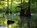 Little River NWR - Cypress Slough